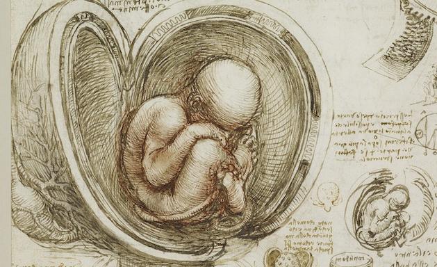 leonardo feto