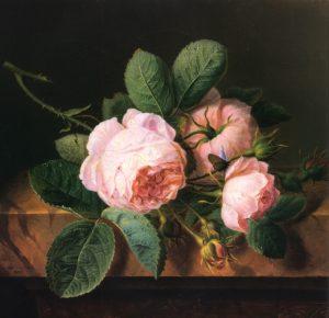 rose cornelis spaendonck